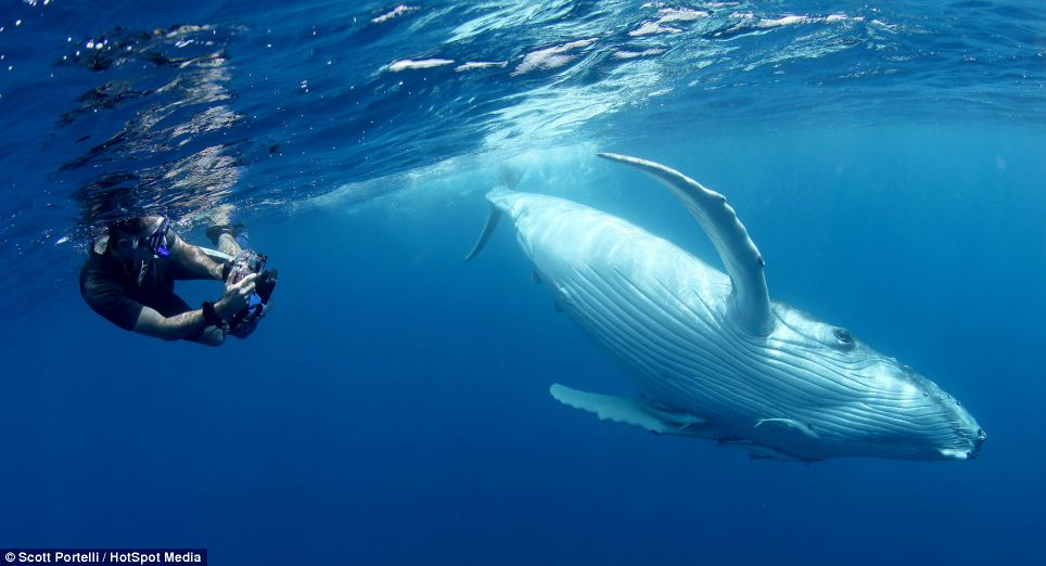 """25-Ton Whale """"Attacks"""" Diver But All Is Not What It Seems"""