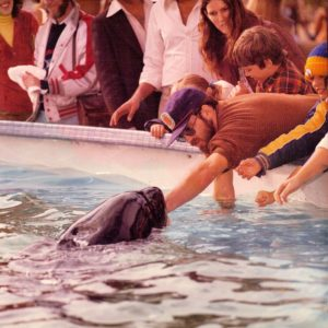 Kasatka interacting with Russell Hockins. Courtesy of Kin to Cetaceans.org